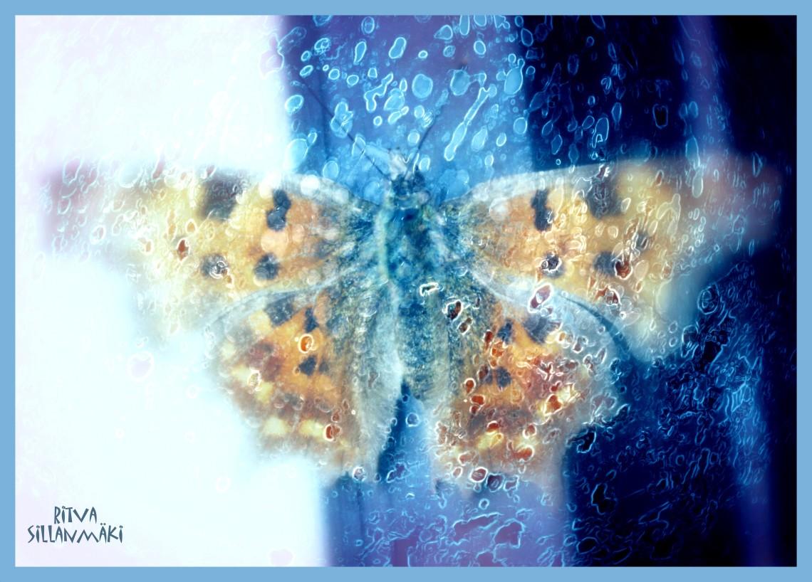 Butterfly Orange