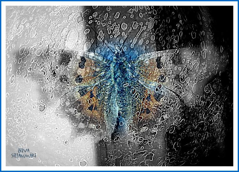 Butterfly  grey