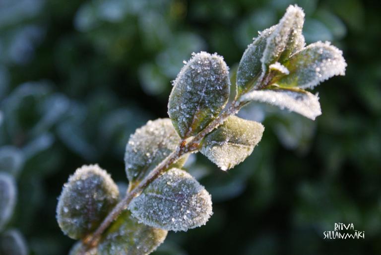 Frost bite 1