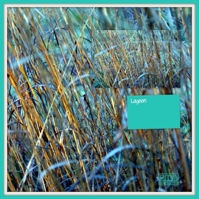 Lagoon grass