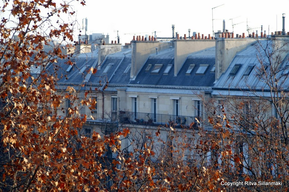 Paris roof top