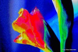 -single-flower-with-minimalist-design