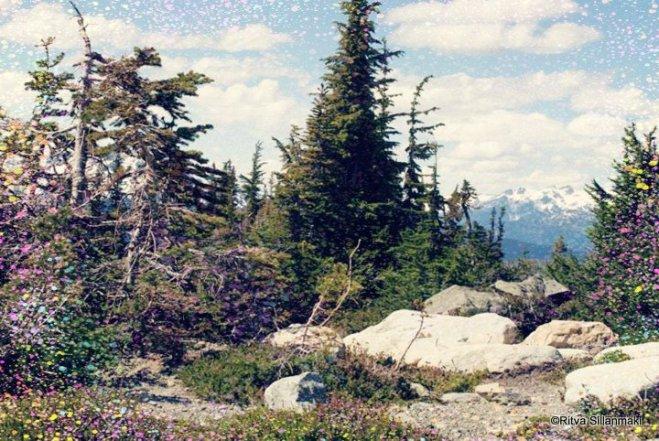 mountaintop trees