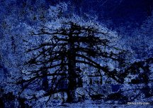 tree (3)
