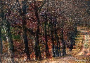 trees Vols1-1pg