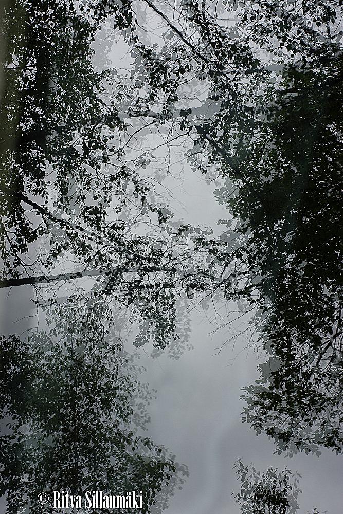 nature-58