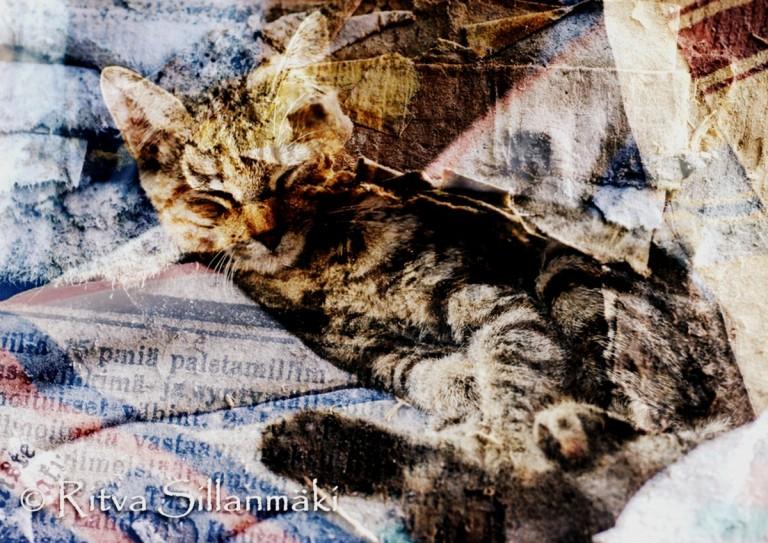 kitty art