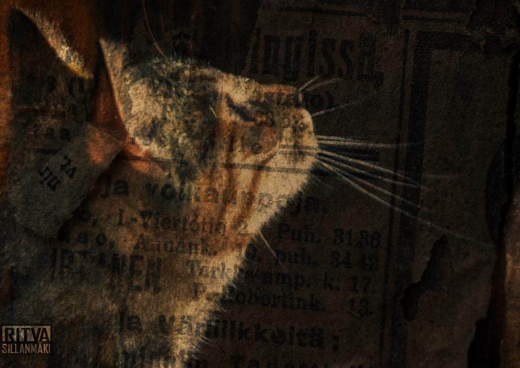 kitty art#8